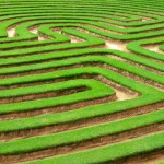 grass lawn cut into a maze like puzzle pattern